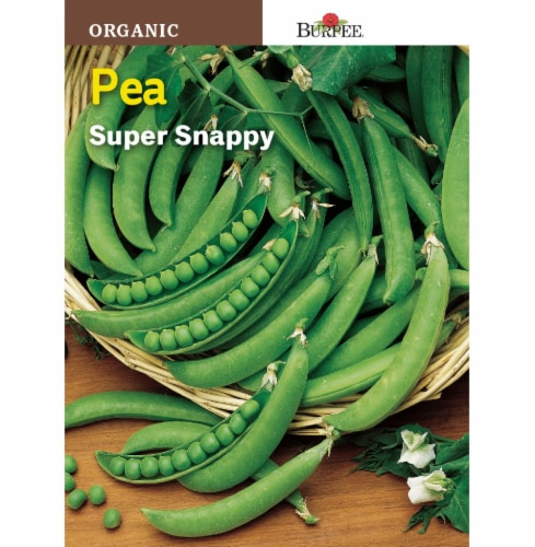 Burpee Super Snappy Organic Pea Seeds - Green Perspective: front