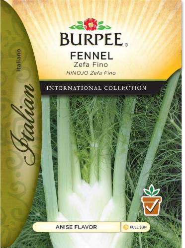 Burpee International Collection Italian Zefa Fino Fennel Seeds Perspective: front