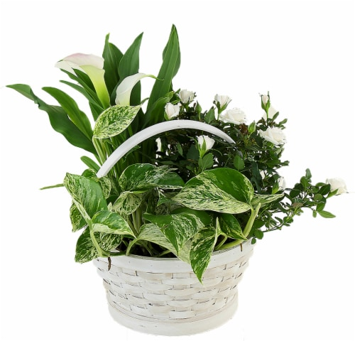 White Basket Potted White Garden Floral Arrangement (Approximate delivery is 2 - 7 days) Perspective: front