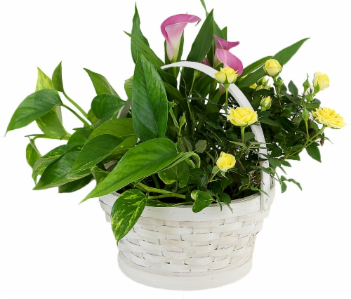 White Basket Potted Colorful Garden Floral Arrangement (Approximate delivery is 2 - 7 days) Perspective: front