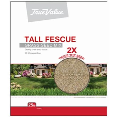 Barenbrug USA 212657 TV25LB Tall Fescue Seed, TV 25 lbs Tall Fescue Seed Perspective: front