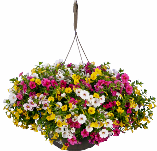 Confetti™ Colorplay Hanging Flower Basket Perspective: front