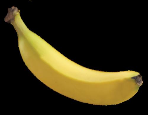 Organic Bananas Perspective: front