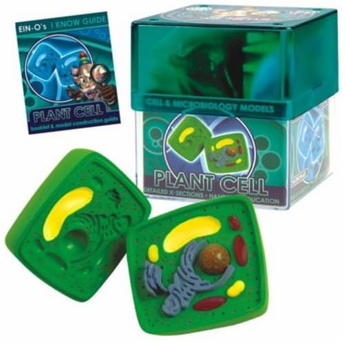 Tedco Toys 32371-PLA Bio Signs Plant Cell Model Perspective: front