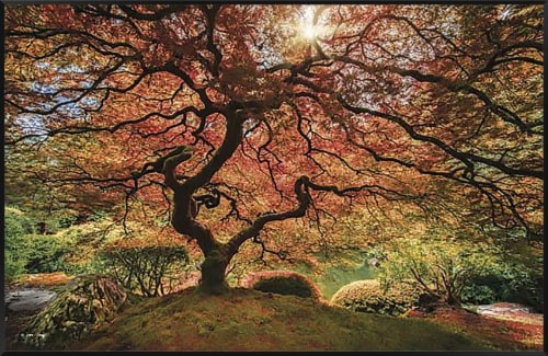 Crystal Art Gallery Red Tree Wall Decor Perspective: front