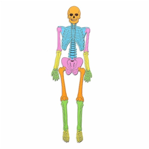 Blue Panda Foam Human Skeleton Puzzle Double Sided, 4 Foot Tall, 15 Pieces Perspective: front