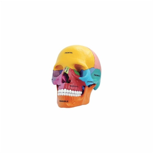 Tedco Toys 26087 4D Anatomy Didactic Exploded Skull Model Perspective: front