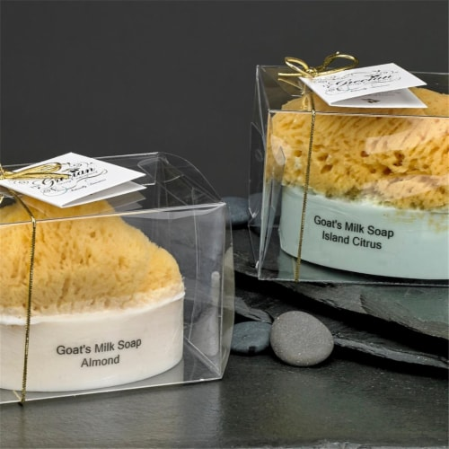 Gracian Goats Milk SS-14 Goats Milk Soap with Sponge - Plumeria, 5 oz Perspective: front