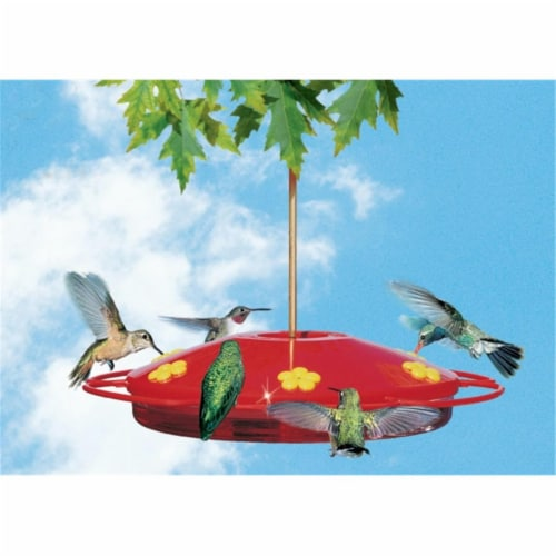 Hummingbird Oasis 16 oz Perspective: front
