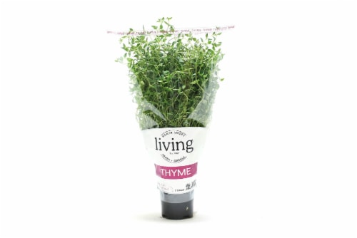 North Shore Living Thyme Perspective: front