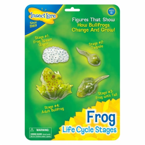 Insect Lore ILP2610BN Frog Life Cycle Stages - Pack of 2 Perspective: front