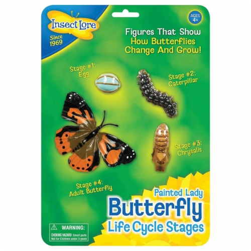 Insect Lore ILP4760BN Butterfly Life Cycle Stages - Pack of 2 Perspective: front