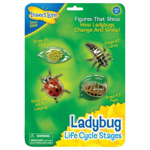 Insect Lore ILP6090BN Ladybug Life Cycle Stages - Pack of 2 Perspective: front