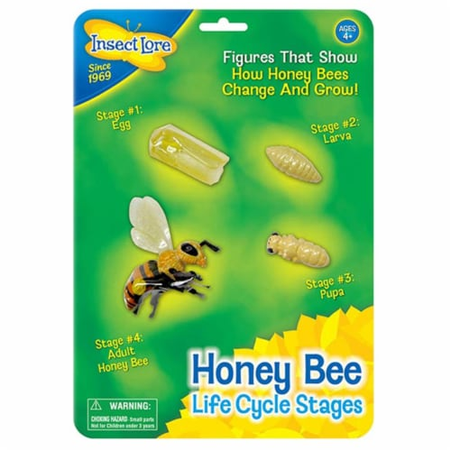 Insect Lore Honey Bee Life Cycle Stages Perspective: front