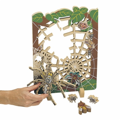 Book Plus 131-0714 Life Cycle of a Spider Foam Model Perspective: front