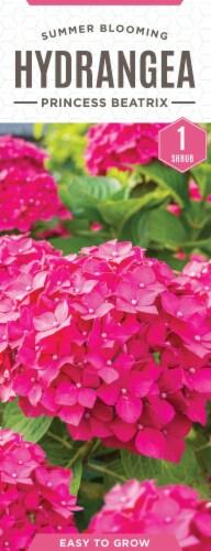 The Joy of Gardening® Princess Beatrix Hydrangea Seeds Perspective: front