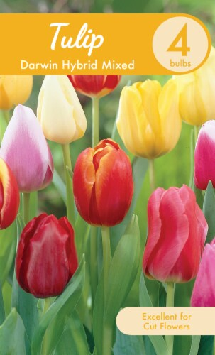Garden State Bulb Darwin Hybrid Mixed Tulip Bulbs Perspective: front
