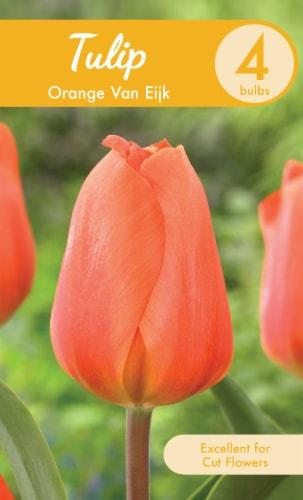 Garden State Bulb Orange Van Eijk Tulip Bulbs Perspective: front