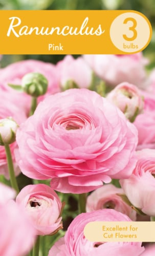 Pink Ranunculus Bulbs Perspective: front
