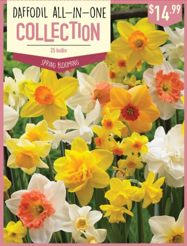 Fred Meyer Garden State Bulb Daffodil All In One Collection Bulbs 25 Count 25 Ct