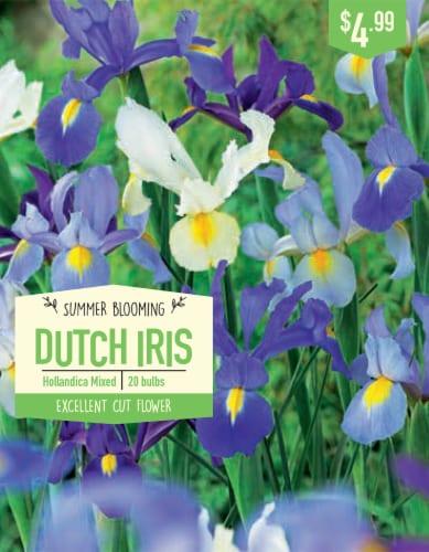 Garden State Bulb Dutch Iris Hollandica Mixed Bulbs Perspective: front