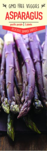 Garden State Bulb Pacific Purple Asparagus Plants Perspective: front