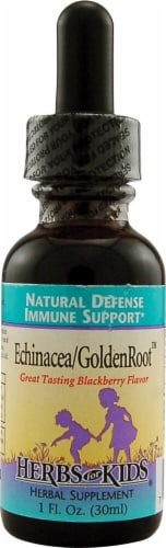Herbs For Kids  Echinacea GoldenRoot™   Blackberry Perspective: front
