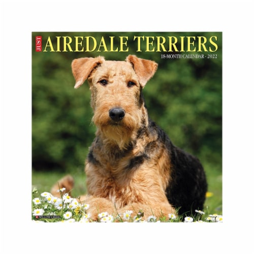 Just Airedale Terriers 2022 Wall Calendar (Dog Breed) Perspective: front