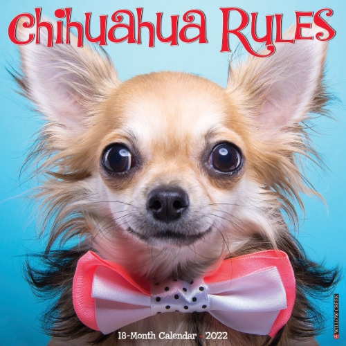 Chihuahua Rules 2022 Wall Calendar (Dog Breed) Perspective: front