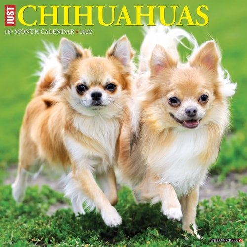 Just Chihuahuas 2022 Wall Calendar (Dog Breed) Perspective: front