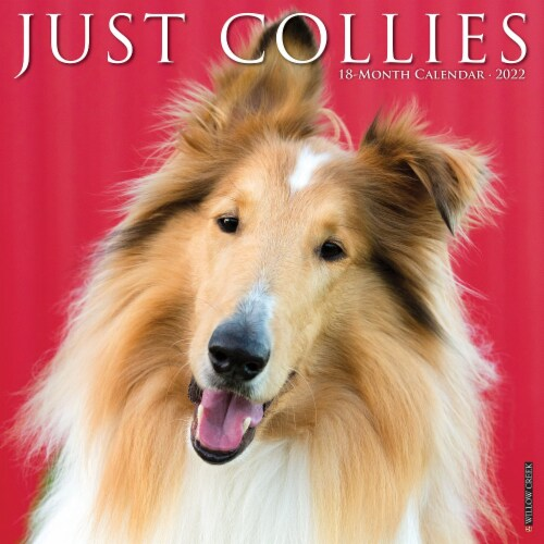 Just Collies 2022 Wall Calendar (Dog Breed) Perspective: front