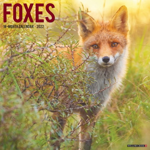 Foxes 2022 Wall Calendar Perspective: front