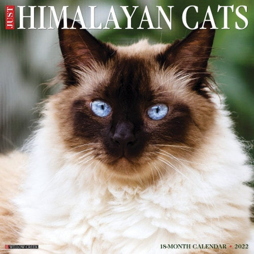 Just Himalayan Cats 2022 Wall Calendar (Cat Breed) Perspective: front
