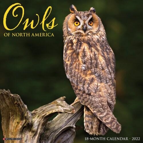 Owls 2022 Wall Calendar Perspective: front