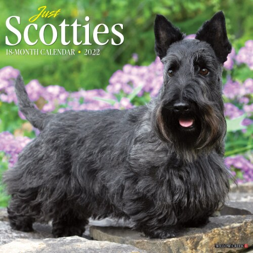 Just Scotties 2022 Wall Calendar (Dog Breed) Perspective: front