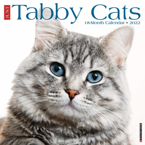 Just Tabby Cats 2022 Wall Calendar (Cat Breed) Perspective: front