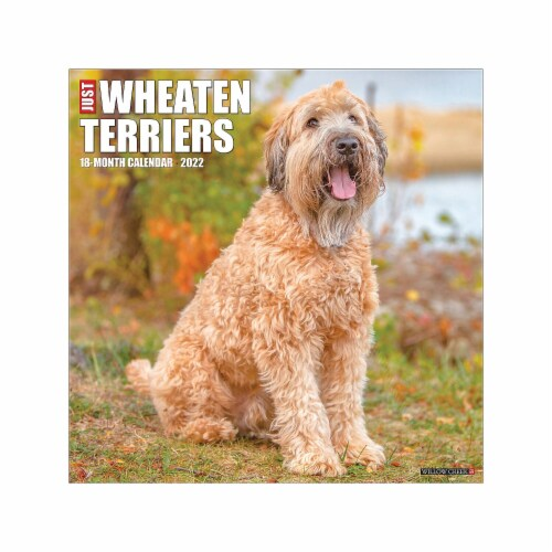 Just Wheaten Terriers 2022 Wall Calendar (Dog Breed) Perspective: front