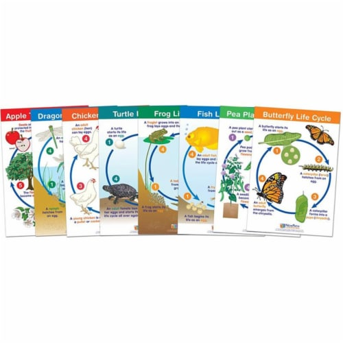 Life Cycles Bulletin Board Chart Set, Set of 8 Perspective: front