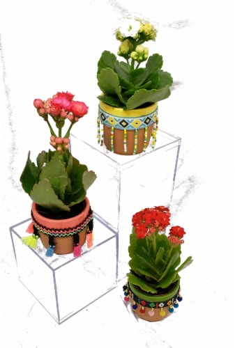 Mini Kalanchoes Festive Ceramic Pots (Approximate Delivery is 2-6 Days) Perspective: front