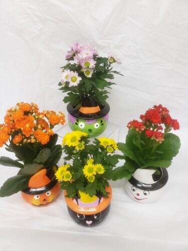 Set of 4 Miniature Plants in Halloween Ceramic Pots Perspective: front