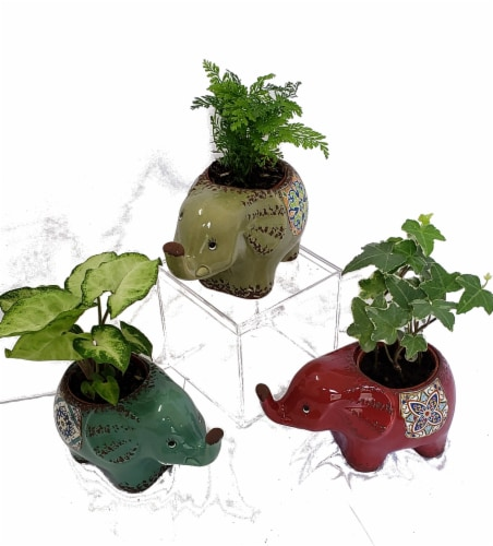 Mini Foliage Plants in Moroccan Elephant Ceramic Pots (Approximate Delivery is 2-6 Days) Perspective: front
