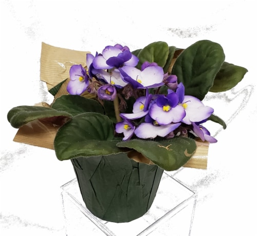 Bi-Colored African Violet with Seasonal Pot Cover (Approximate Delivery is 2-6 Days) Perspective: front
