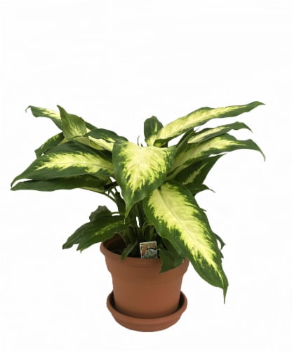 Upright Plant with Saucer Perspective: front