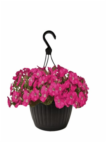 Andy Mast Greenhouses Pink Petunia Hanging Basket (Approximate Delivery is 2-7 Days) Perspective: front
