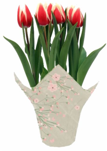 Andy Mast Greenhouses Bi-Color Tulips (Approximate Delivery is 2-7 Days) Perspective: front