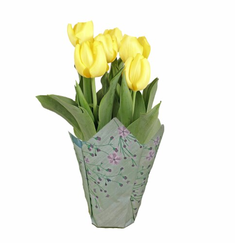 Andy Mast Greenhouses Potted Yellow Tulips (Approximate Delivery is 2-7 Days) Perspective: front