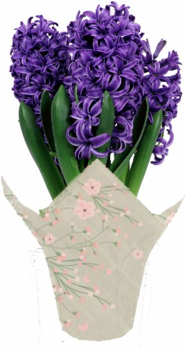 Andy Mast Greenhouses Potted Purple Hyacinth (Approximate Delivery is 2-7 Days) Perspective: front