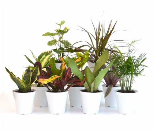 Plant Solutions Inc. Foliage in Plastic Cover - Assorted Perspective: front