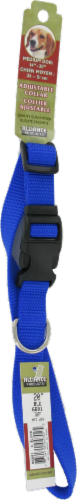 Alliance Blue Medium Dog Collar Perspective: front