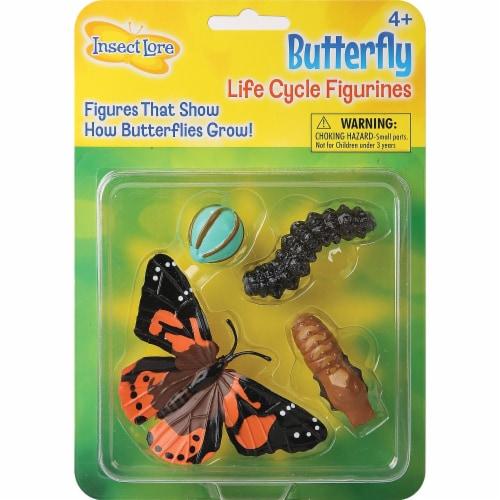 Insect Lore Butterfly Life Cycle Stages Perspective: front